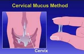 muco cervical