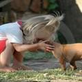 animal de estimação e chegada do bebê